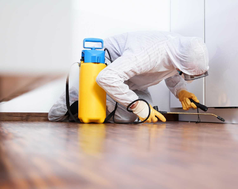 Reasons For Choosing Professional Pest Control Services